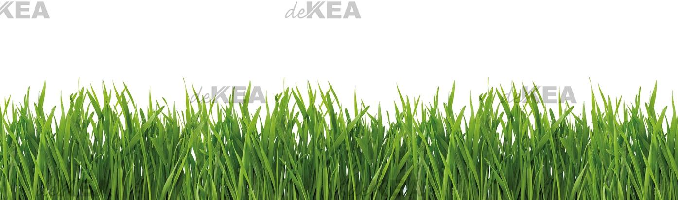 panele szklane dekea z trawą