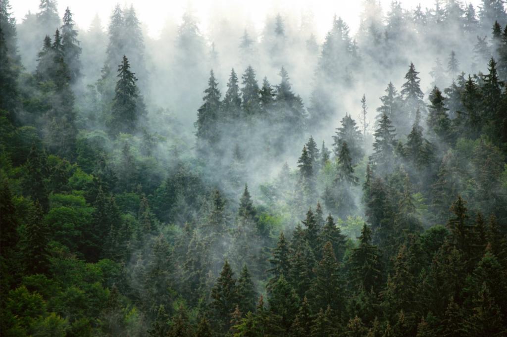 Fototapeta Dekealas, drzewa, mgła